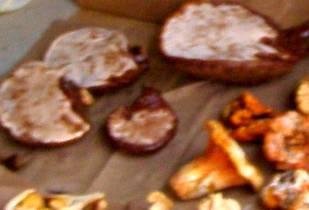 Ling Chi also known as Oregon Varnished Conk or Ganoderma Oregonense